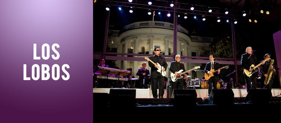 Los Lobos at The Senate
